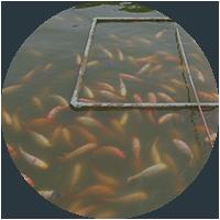 Alimentación para peces