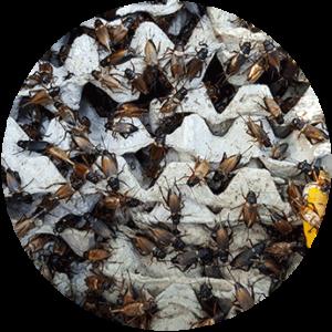 Como criar insectos