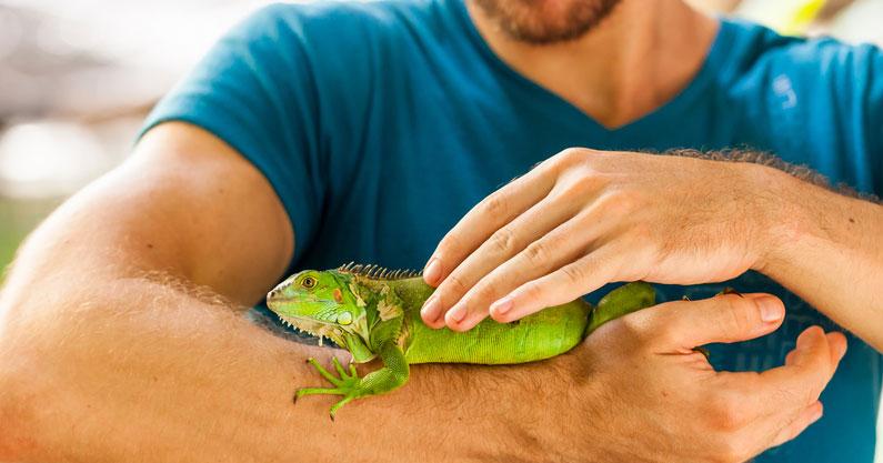 criadores de reptiles