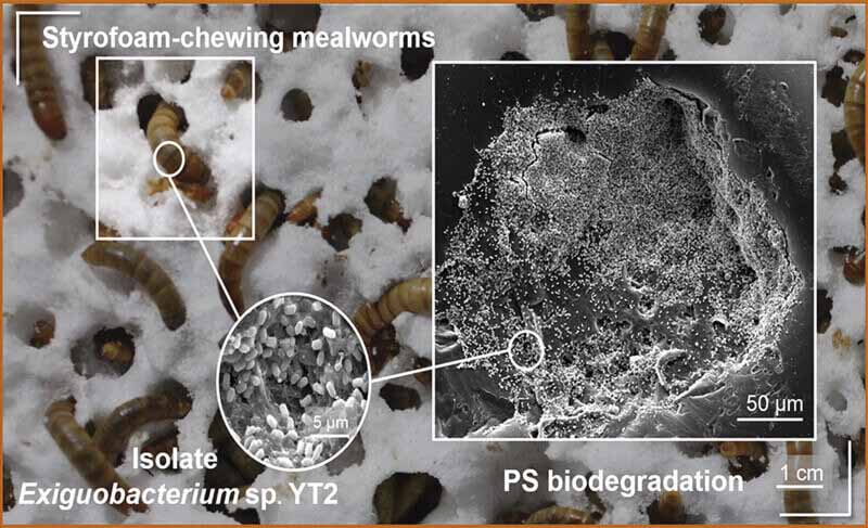 Biodegradación del plástico