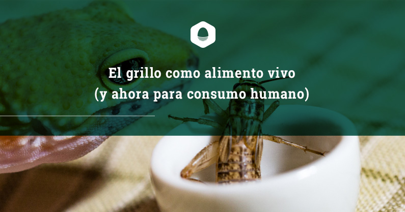 El grillo como alimento vivo y ahora para el consumo for Como criar peces para consumo humano